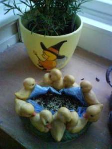 Ostergras - die Samen in der Entchenschale
