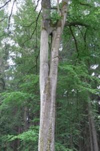 Baum mit Feenloch